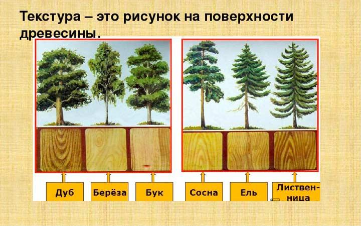 Виды дерева