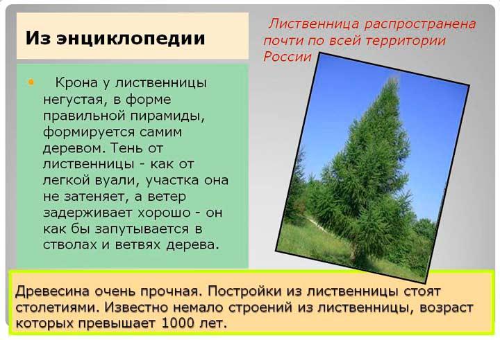 Преимущества материалов из лиственницы